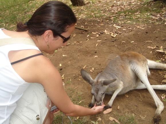 Érika alimentando um canguru Blog Vem Por Aqui