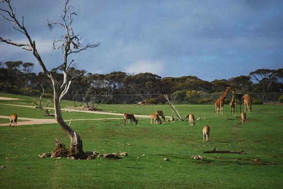 Monarto Zoo Blog Vem Por Aqui