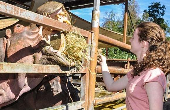 Mulher alimentando rinoceronte no Adelaide Zoo Blog Vem Por Aqui
