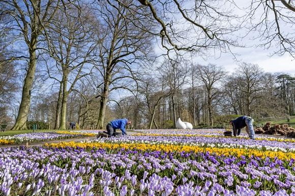 Trabalhadores cuidando das flores no parque Keukenhof Blog Vem Por Aqui