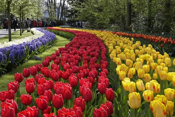 Tulipas brancas, roxas, vermelhas e amarelas no parque Keukenhof Blog Vem Por Aqui