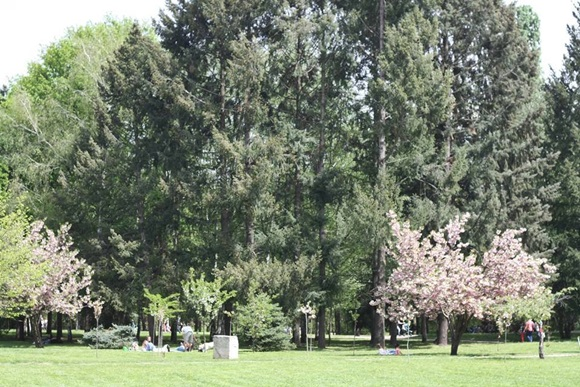 Pinheiros em parque da Bulgária Blog Vem Por Aqui