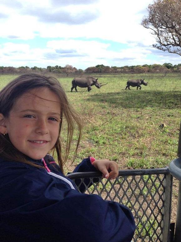 Observando rinocerontes, na África Blog Vem Por Aqui