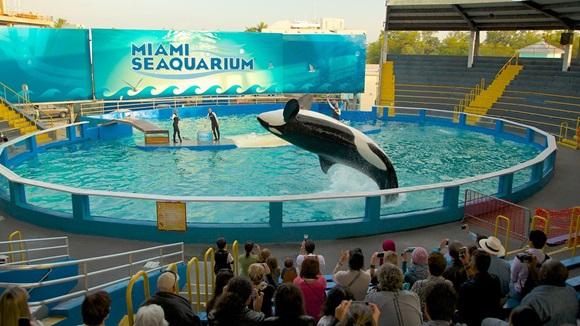 Baleia pulando em piscina do Seaquarium e público em frente Blog Vem Por Aqui