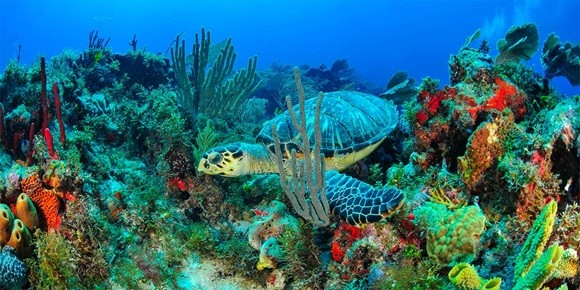 Tartaruga e plantas marinhas no mar de Isla Mujeres Blog Vem Por Aqui