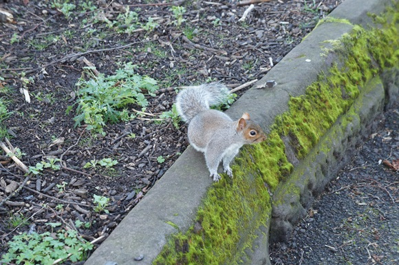 Esquilo no passeio Blog Vem Por Aqui