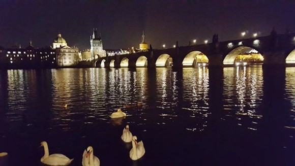 Vista noturna da Ponte Carlos com cisnes nadando no rio Blog Vem Por Aqui