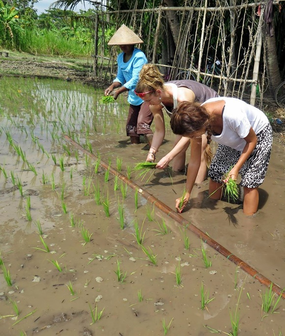 Fanny e mais uma turista com um morador, plantando o arroz Blog Vem Por Aqui