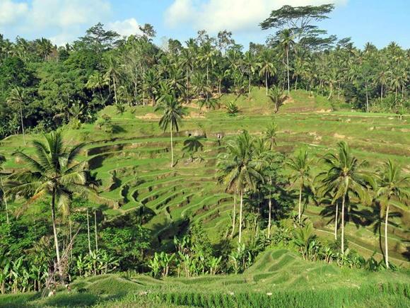 Campo verde em vários níveis e cheio de árvores Blog Vem Por Aqui