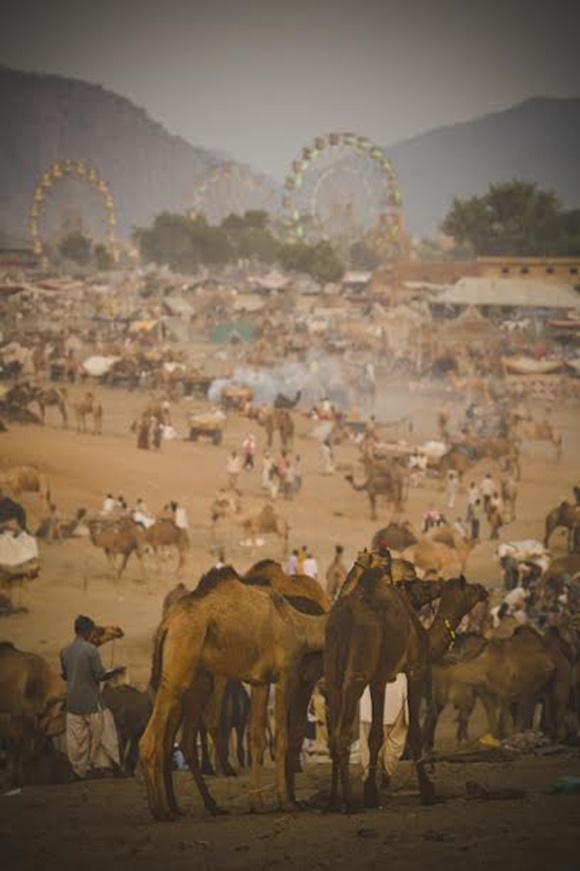 Feira de camelo com animais na frente e roda gigante ao fundo Blog Vem Por Aqui