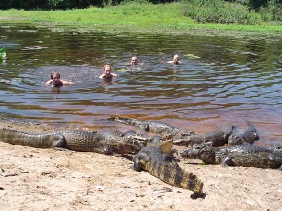 Fred e outros quatro turistas nadando no rio e um monte de jacarés na margem Blog Vem Por Aqui