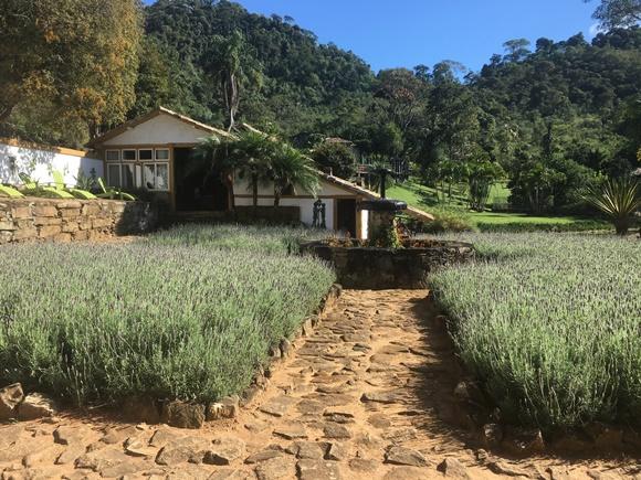 Caminho calçado com pedras e pequenos arbustos de lavanda dos lados com casa da recepção ao fundo Blog Vem Por Aqui