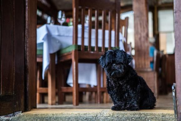 Cachorrinho de pelo cheio e preto parado na soleira da porta do restaurante Blog Vem Por Aqui