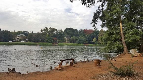 Lago do jardim com banquinho na beirada e aves dentro da água Blog Vem Por Aqui