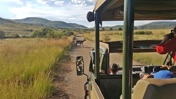 Lateral do carro do safari passando na estrada com cervo atravessando a pista Blog Vem Por Aqui