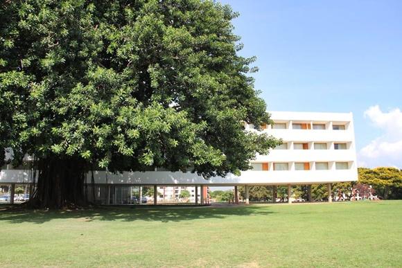 Árvore grande em frente a um prédio branco com raízes que se mesclam a parte do prédio Blog Vem Por Aqui