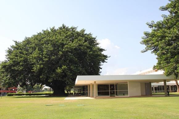 Árvore do lado esquerdo com copa acima do prédio e gramado em frente Blog Vem Por Aqui