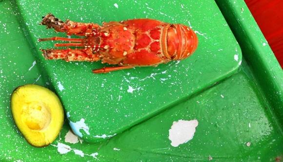 Lagosta em cima de uma estrutura verde do barco com uma metade de abacate cortada em frente Blog Vem Por Aqui