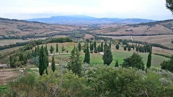 Terreno amplo com pinheiros e gramado verde Blog Vem Por Aqui