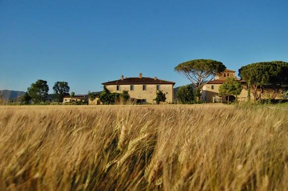 Plantação de trigo a frente da propriedade Blog Vem Por Aqui