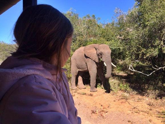 Nalu de costas, dentro de um carro, olhando o elefante passando Blog Vem Por Aqui