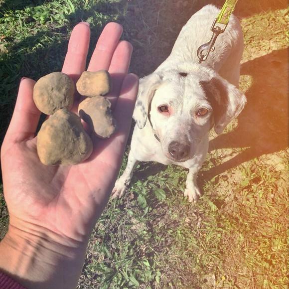 Mão segurando três trufas e cachorro branco no chão, observando Blog Vem Por Aqui