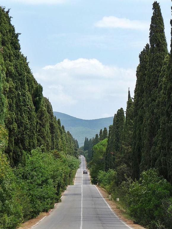 Estrada com grandes pinheiros dos dois lados e um carro passando ao longe Blog Vem Por Aqui