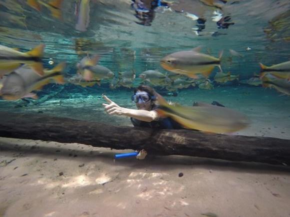 Mulher no fundo do rio segurando um tronco de madeira caído no chão vendo peixes passando Blog Vem Por Aqui